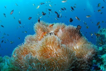 Diving-Spots-in-Bali-Indonesia