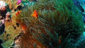 Scuba-Diving-Snorkeling-Bali-Indonesia2