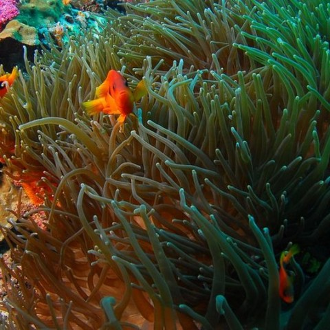 Scuba-Diving-Snorkeling-Bali-Indonesia2